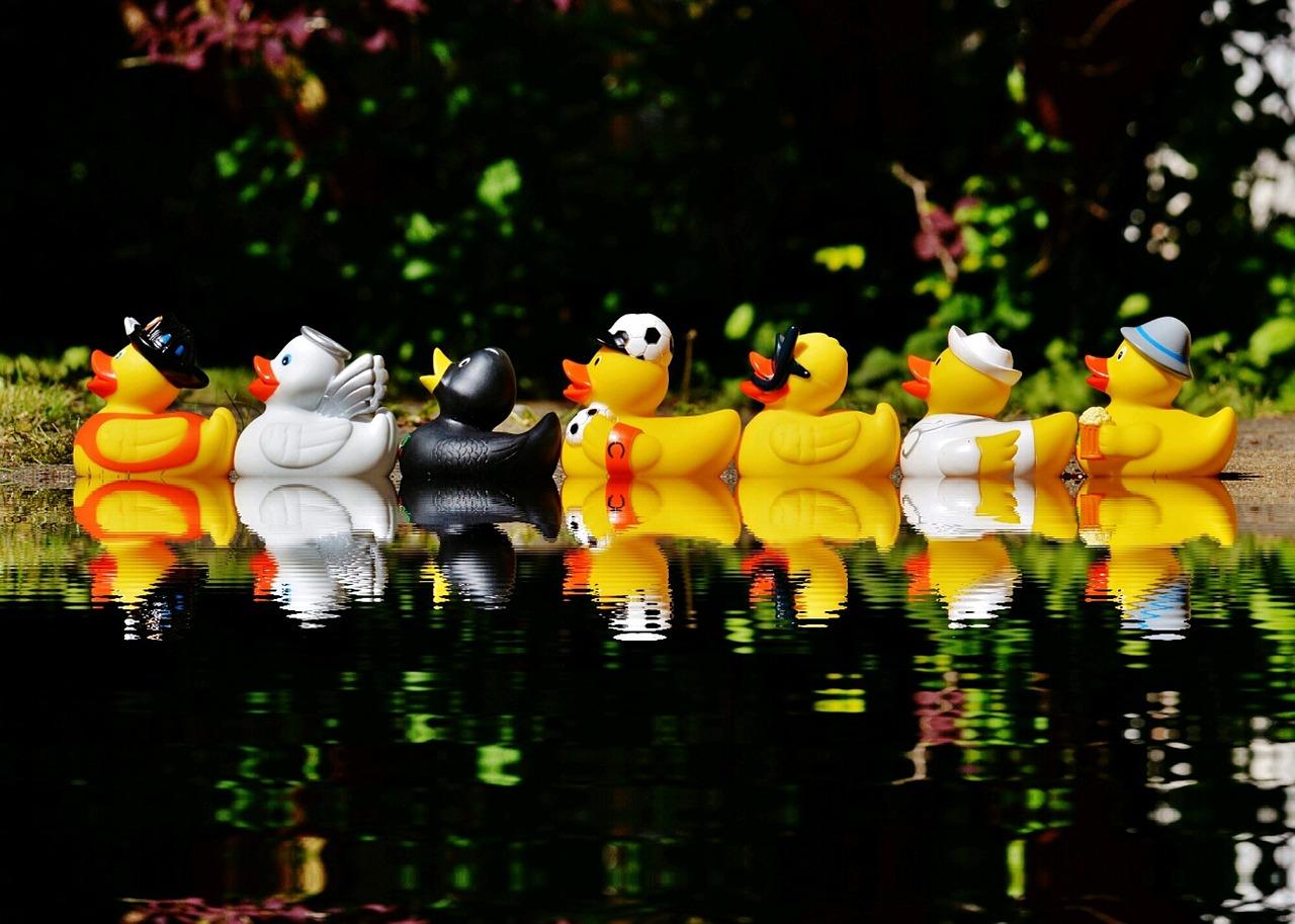 rubber-ducks-1408308_1280